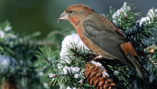 birds_9