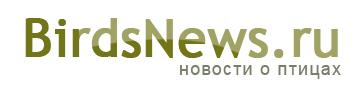 Birdsnews.ru — новости о птицах