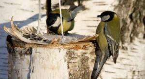 Жители ЮВАО лично познакомятся с зимующими в Москве птицами