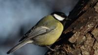 Международный день птиц отметят 4 апреля в Московском зоопарке