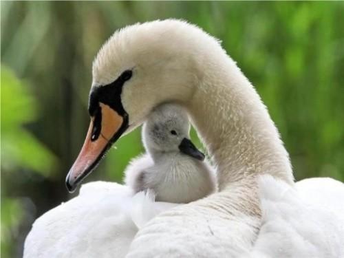 «Мосприрода» приглашает на «День птенца»
