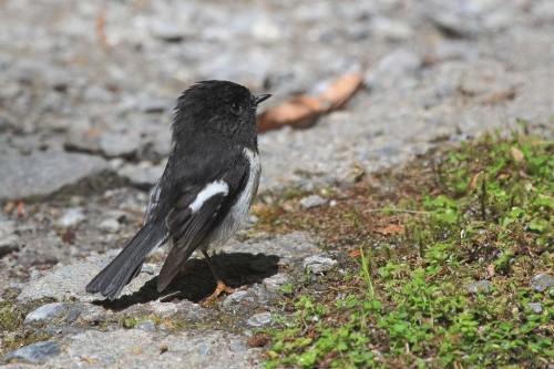 Ученые придумали как проверить уровень IQ у птиц