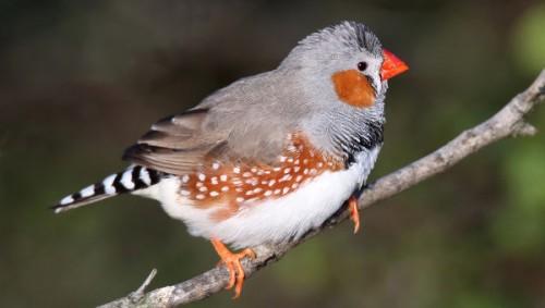 Птицы помогли ученым объяснить, почему человек способен любить