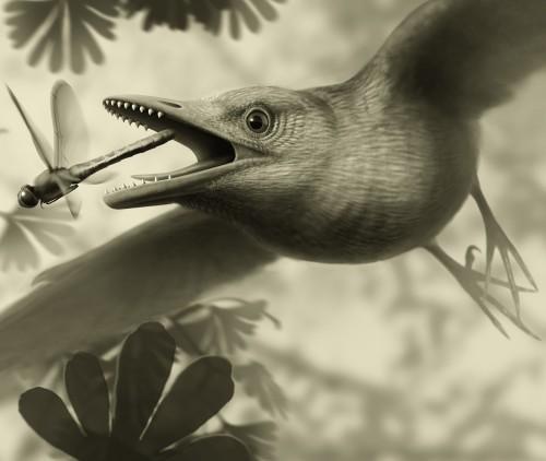 Древней птице приписали хорошие летные характеристики