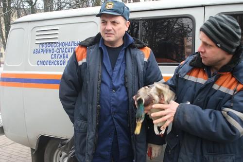 В Смоленске водолазы спасли утку с подбитым крылом