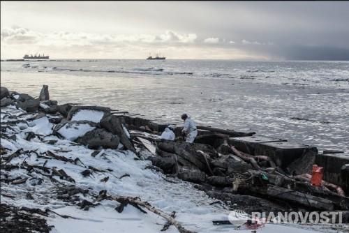 "Пострадавших из-за разлива мазута с танкера ""Надежда"" птиц эвакуируют"