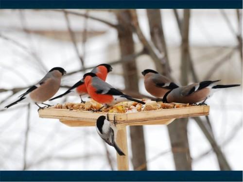 В парке «Покровское-Стрешнево» расскажут, как правильно кормить птиц зимой