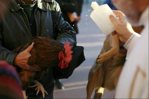 Благословение домашних животных