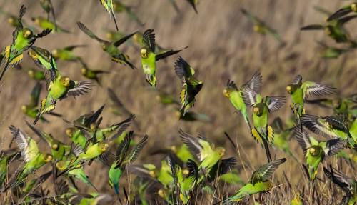 Больше, чем «Попка — дурак»: что могут сказать попугаи?