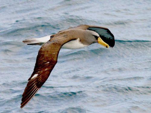 Перелетные птицы помогают синоптикам прогнозировать погоду