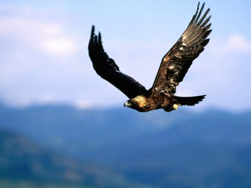 Ученые: птицы могут спать во время полета