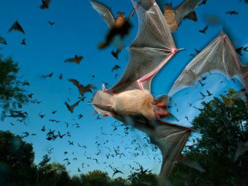 Самым быстрым летающим животным оказалась совсем не птица