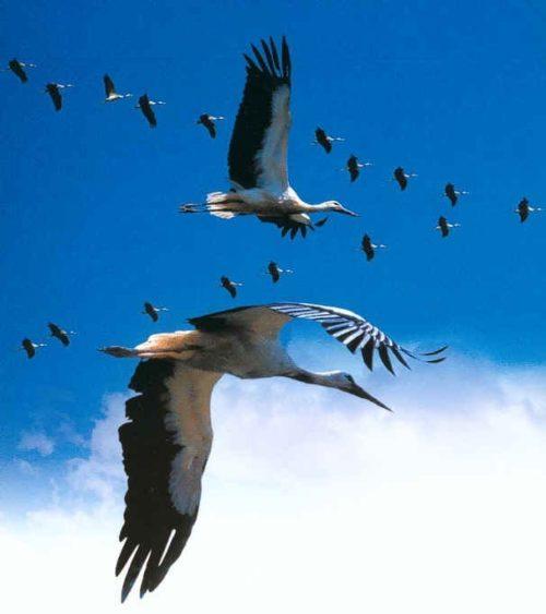 Ученые: Глобальное потепление стало причиной ранней миграции птиц