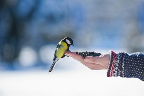 Саратовцам предложили покормить зимующих птиц на проспекте Кирова