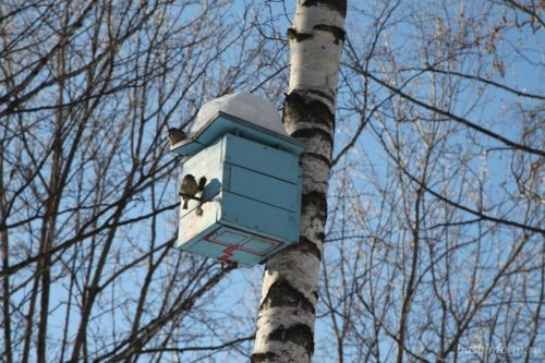 Интернет-конкурс «Птицы Башкирии» приглашает школьников к участию
