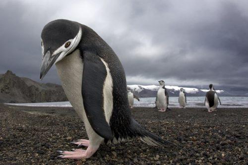 Ученые: Гигантский древний пингвин жил с динозаврами