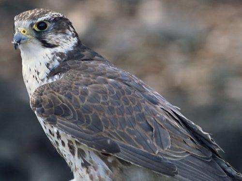 Прокурор потребовал закрыть сайт по продаже редких птиц