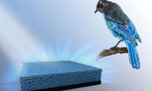 Перья птиц вдохновляют ученых на создание новых цветов