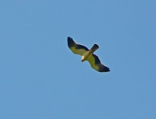 Орла–карлика и обыкновенного ужа обнаружили в Московской области