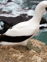 В ближайшие сто лет популяции птиц на Галапагосах сократятся