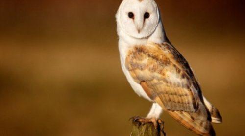 Ученые будут лечить возрастную глухоту людей с помощью птиц