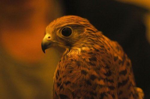 Вышку для наблюдения за птицами установили в Томской области