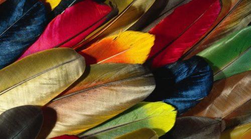 Шведские биотехнологи рекомендуют ввести в рацион перья птиц