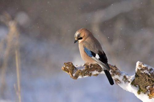 На экскурсии «Синичкин день» расскажут о птицах обитающих на северо-востоке столицы