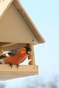 В заказнике «Лианозовский» расскажут о птицах, обитающих в парках