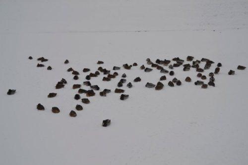 В Саранске зимуют более сотни уток
