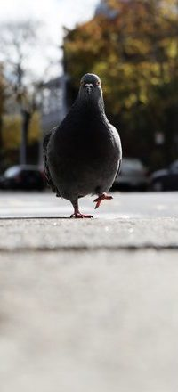 «Звуковые маяки» спасут птиц от зданий и турбин