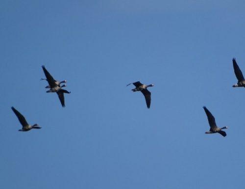 Весенний пролет птиц начался в Подмосковье