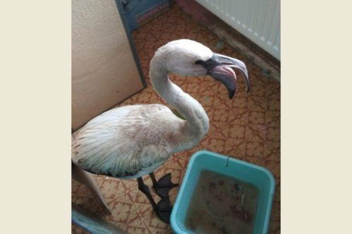 В Кузбассе с неба упала замерзшая экзотическая птица