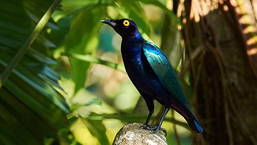 bird08