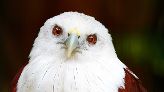 bird09