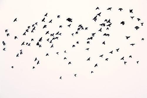 перелетные птицы мельчают