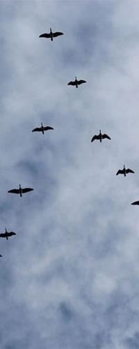 Птицы синхронизируют миграцию с появлением зелени