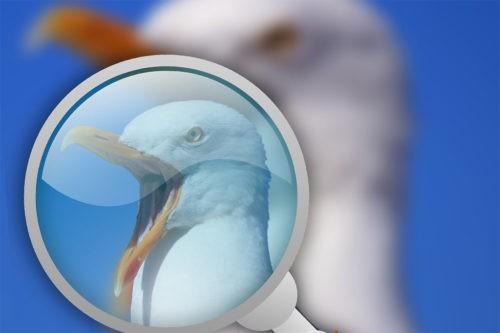 Ученые все еще находят новые виды птиц