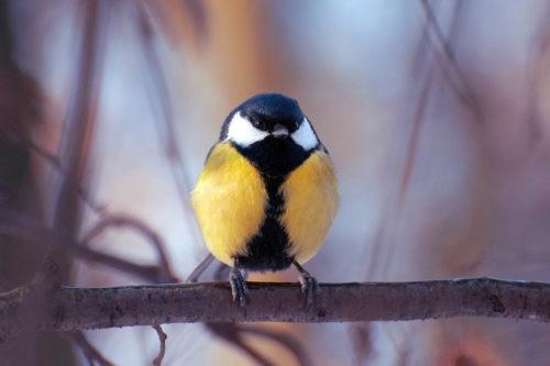 мелких птиц в столице станет больше