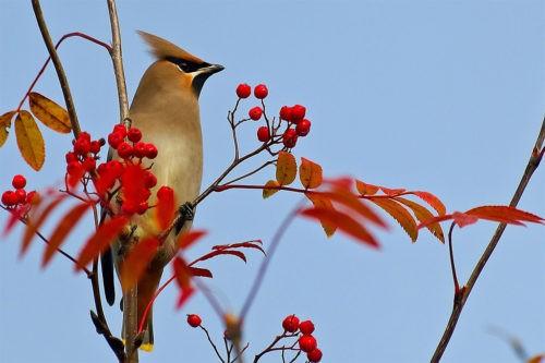 Не стоит кормить диких перелетных птиц