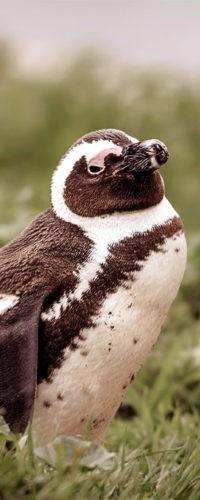 Чикагских пингвинов отправили играть в футбол