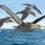 В Антарктиде обнаружили окаменелости гигантских птиц