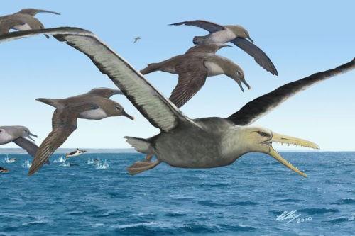 пелагорнитиды – древние родственники альбатросов