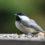 Ролик о создании птичьей кормушки попал в топ YouTube в 2020 году