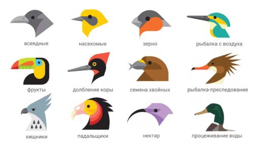 разнообразие форм клювов птиц