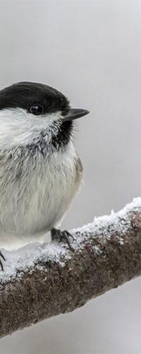 В Москве можно встретить более 40 видов птиц из Красной книги