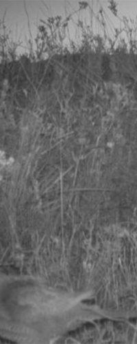 В Австралии сфотографировали самого редкого попугая в мире 1