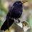 Колибри могут понижать температуру тела до 3,3 °C