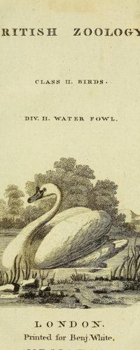 Иллюстрации из книги «Британская зоология» 1776 года