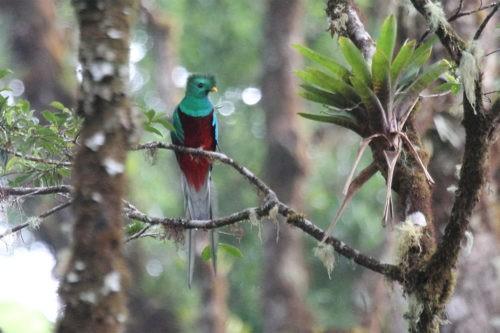 Кетсаль, священная птица ацтеков и майя